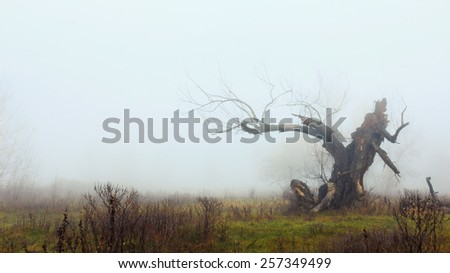 Dead tree on the meadow in late autumn faded in the mist - stock photo