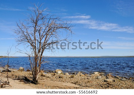 Dead tree on the shore of. - stock photo