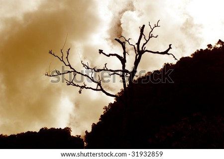 dead tree on top of hill in silhouette - stock photo