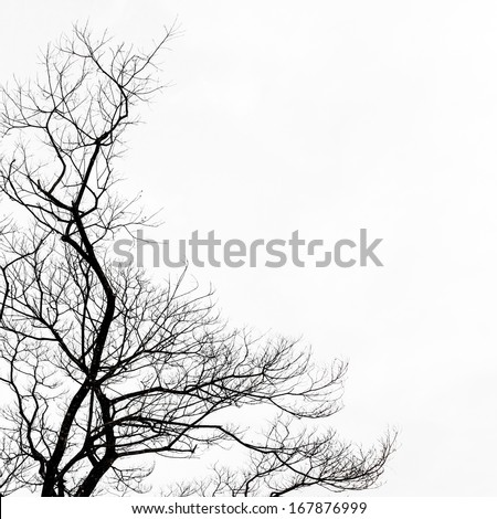 dead tree on white background - stock photo