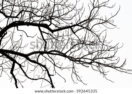 Dead tree on white background