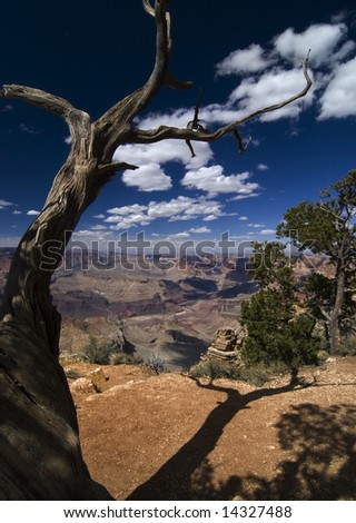 Dead tree overlooking the Grand Canyon - stock photo