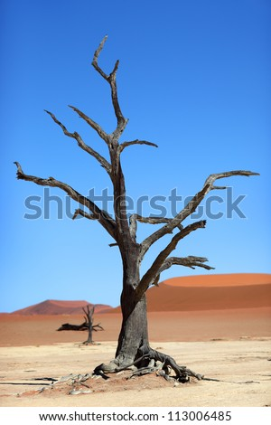 Dead tree, red dune, desert, Namibia - stock photo