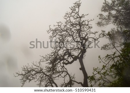Dead tree silhouette with misty background at Matheran