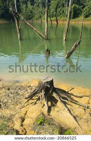 Dead tree stump due to logging and soil erosion. - stock photo