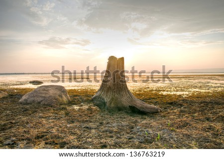 Dead Tree Stump on Sunset Background (High Dynamic Range)