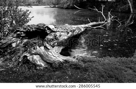 dead tree trunk in water