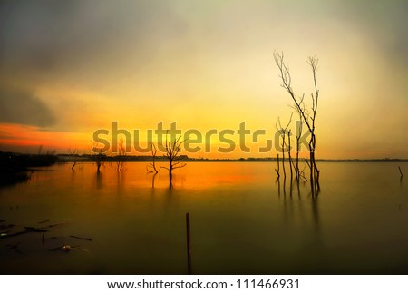 dead tree trunks and branches submerged in a lake at sunset