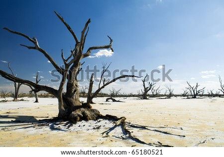 Dead tree trunks and limbs on a white salt lake under blue sky - stock photo