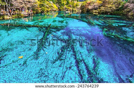 Dead tree trunks in the lake. Jiuzhaigou Valley was recognize by UNESCO as a World Heritage Site and a World Biosphere Reserve - China - stock photo