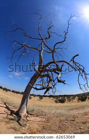 Dead tree with blue sky and the sun - stock photo