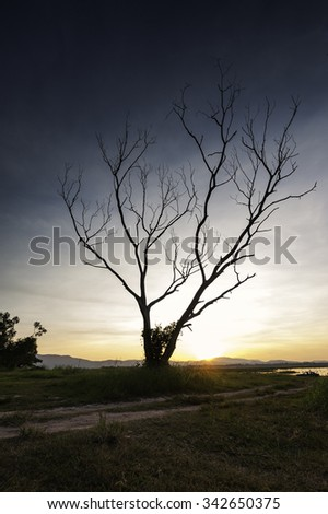 Dead Tree with photographer on dramatic sky - stock photo