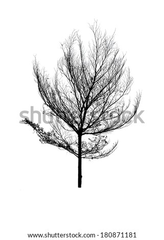 Dead Tree without Leaves  isolated over white background - stock photo