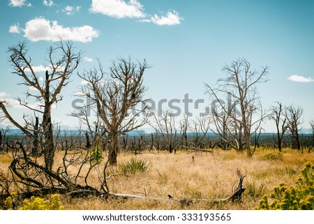 Dead trees after a fire, USA - stock photo