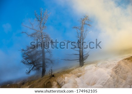 Dead Trees and Thick Geyser Steam against Beautiful Winter Sunset sky  - Yellowstone National Park  - stock photo