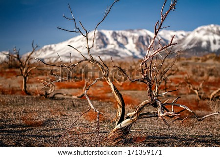 Dead trees at Mono Lake with Yosemite still covered in snow in the background. - stock photo