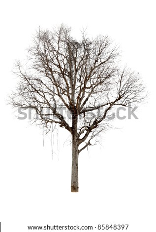 Dead trees.Dead trees on a white background. - stock photo