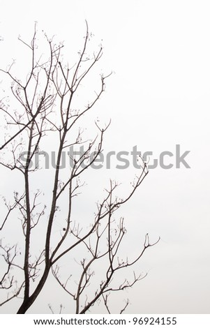 Dead trees. Due to drought conditions. With the hot weather. - stock photo
