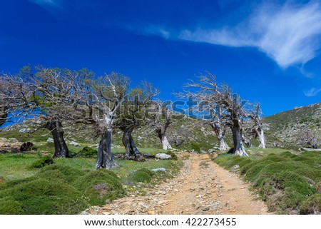 Dead trees from the famous Enchanted Forest place in Ochi mountain, against a blue sky and clouds in Greece - stock photo
