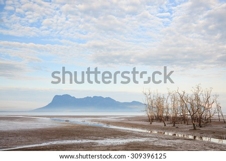 Dead trees in beach at low tide  - stock photo