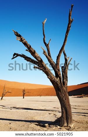 Dead trees in Dead Vlei - Sossusvlei, Namib desert, Namibia. - stock photo