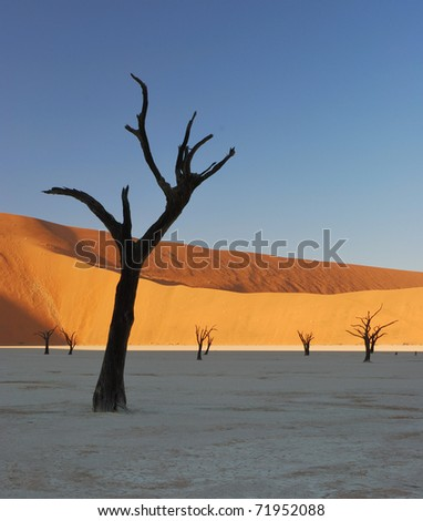 Dead Trees in Deadvlei, Namibia - stock photo