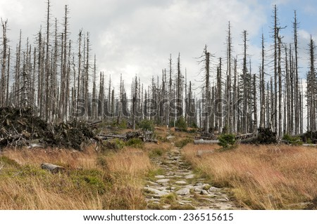 Dead trees in forest, Bayerischer Wald, Germany - stock photo