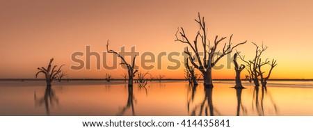 Dead trees in Lake Bonney, South Australia - stock photo