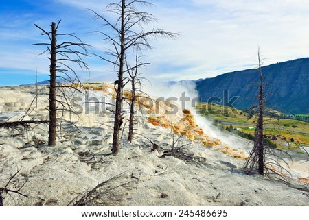 Dead trees in Mammoth Hot Springs area of Yellowstone National Park, Wyoming - stock photo