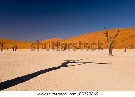 Dead trees in Namib desert with shadow and sand dunes - stock photo