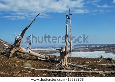 Dead trees in suburb - stock photo