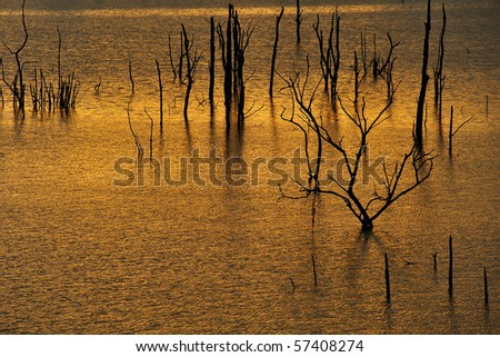 Dead trees  in the lake