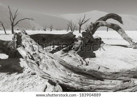 Dead trees in the Namib Desert - stock photo