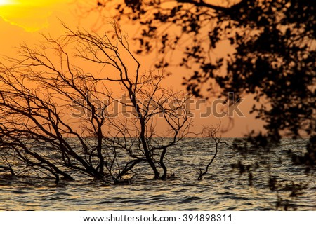 Dead trees in the sea at beatiful sunrise.
