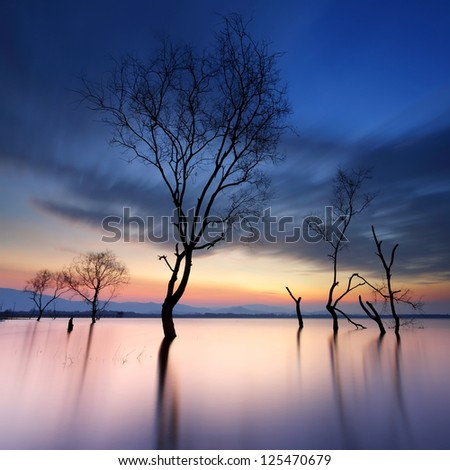 Dead trees in the water from the reservoir at sunrise - stock photo
