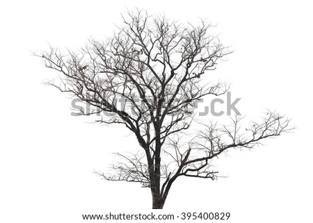 dead trees isolated on the white background.