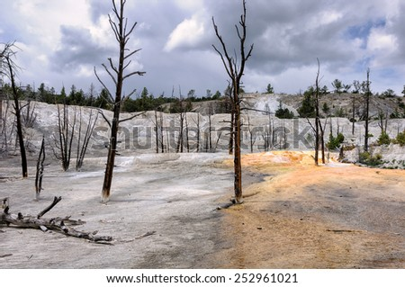 Dead trees landscape Yellowstone  - stock photo