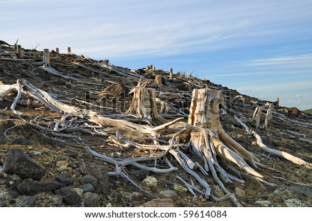 Dead trees near to metallurgical factories. Consequences of adverse ecological conditions. - stock photo