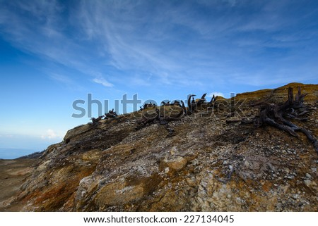 Dead trees on fire from the volcano - stock photo
