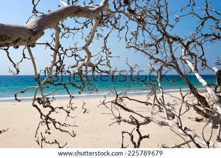 Dead trees on the beach with blue sea background. - stock photo