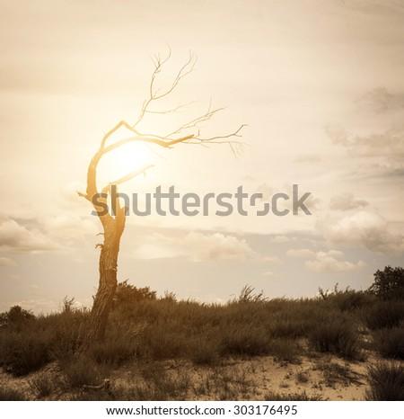 Dead trees on the prairie. - stock photo