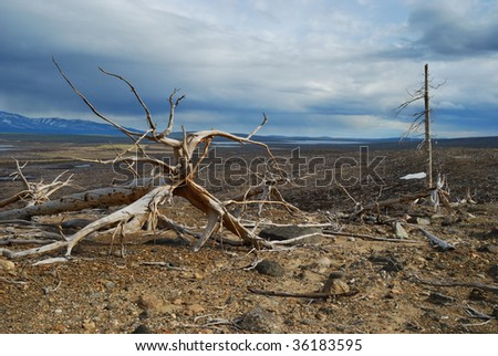 Dead trees on the slope of hill - stock photo