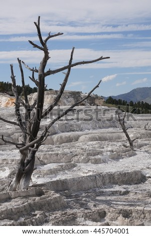 Dead trees on the travertine terrace of Mammoth Hot Springs, Yellowstone National Park - stock photo