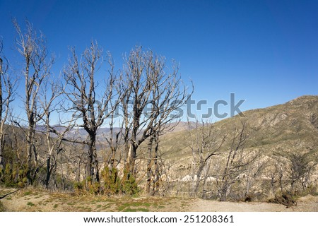 Dead trees stand above a charred valley in the San Gabriel mountains. - stock photo