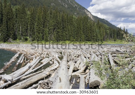 Dead Trees with young woman hiking, Canada - stock photo
