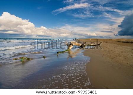 Dead trunk on a beach. - stock photo