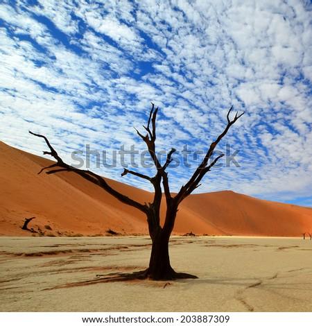 Dead Vlei in Namib desert,Namibia - stock photo
