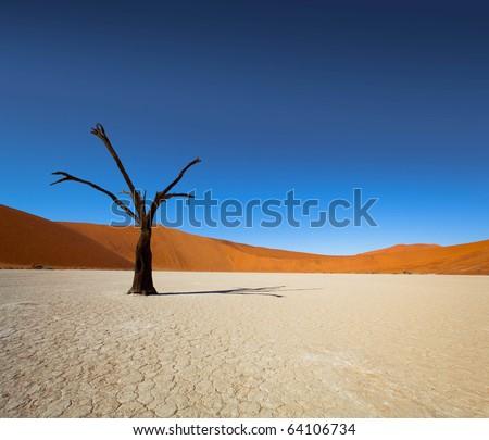 Dead Vlei - Sossusvlei, Namib Desert, Namibia - stock photo
