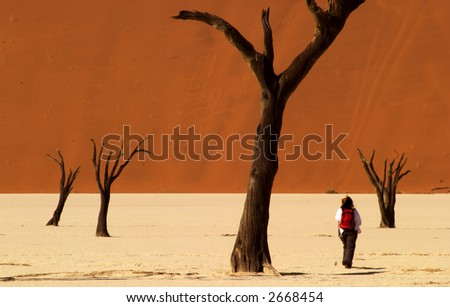 Dead vlei valley in Namibia close to Sossusvlei - stock photo