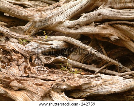 Dead wood - stock photo
